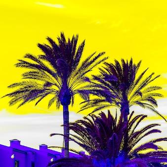 Palm fashion art. clima tropical