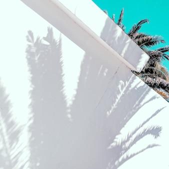 Palm shadow conceito minimalista de moda tropical
