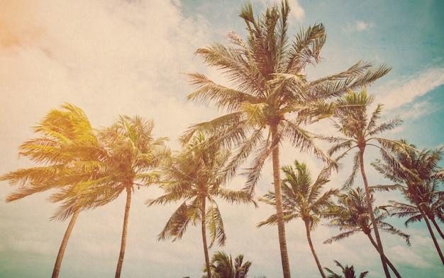 Palma de coco na praia do mar com efeito vintage.
