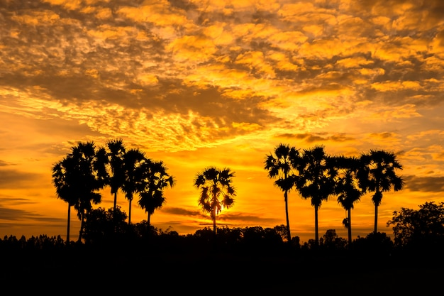 Palma de toddy bonita no fundo do nascer do sol.