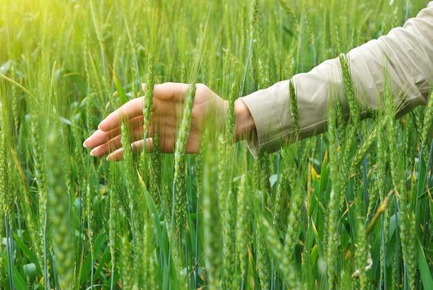 Palma de trigo e mulher