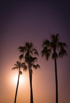 Palmas no pôr do sol. cores pastel profundas no fundo. formas escuras de palmas