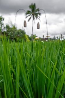Palmeira com grama verde
