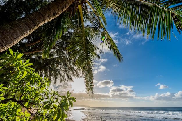 Palmeira com vegetação e ondas na praia do sol na costa norte de oahu, havaí
