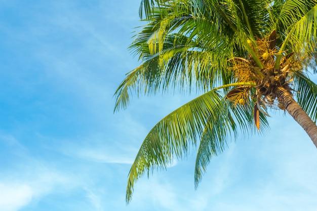 Palmeira de árvores tropicais e céu azul