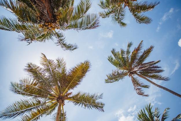 Palmeira de coco com céu azul, fundo tropical bonito. Foto Premium