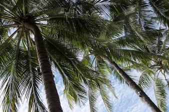Palmeira de coco com o bulbo elétrico.