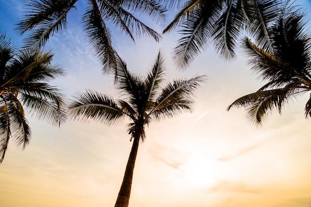 Palmeira de coco na praia e mar