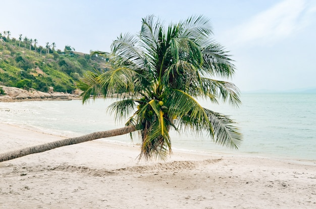 Palmeira de coco na praia, tropical linda.
