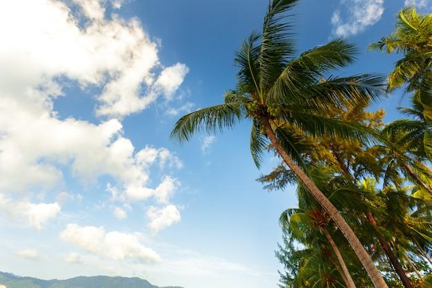 Palmeira de coco no fundo do céu