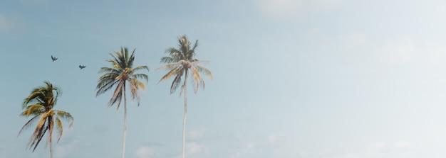 Palmeira de coco tropical mínima no verão com o fundo do céu.