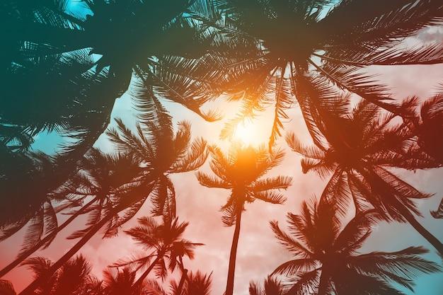 Palmeira de fundo tropical de verão, filtro vintage