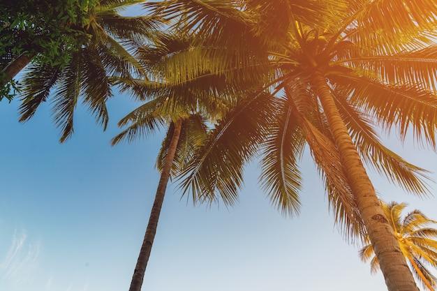 Palmeira do coco na costa tropical na praia da ilha com tom do vintage.