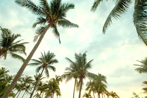 Palmeira do coco no céu azul da praia tropical com luz solar da manhã no verão, uprisen o ângulo.