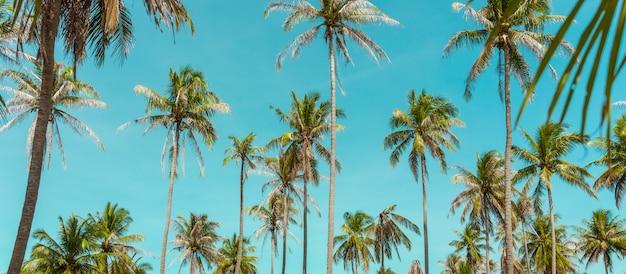 Palmeira do coco sob o céu azul. fundo vintage. cartão de viagem. retro em tons. foco suave