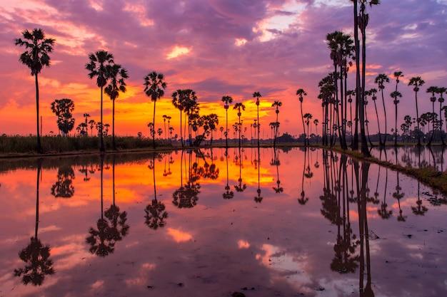 Palmeira durante a hora do nascer do sol