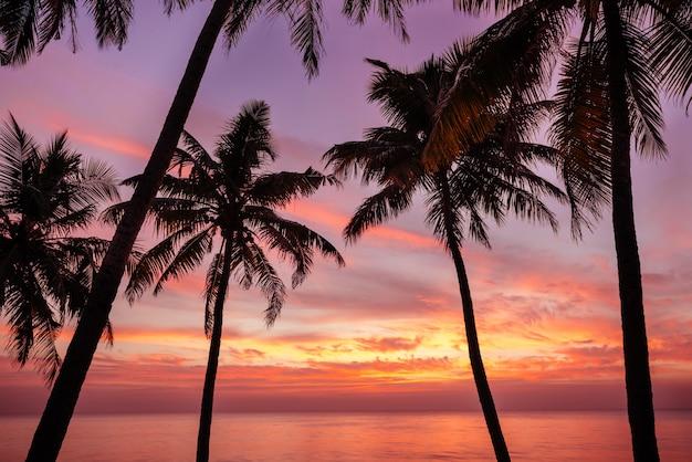 Palmeira e belo pôr do sol na praia