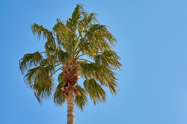 Palmeira e céu azul claro Foto Premium