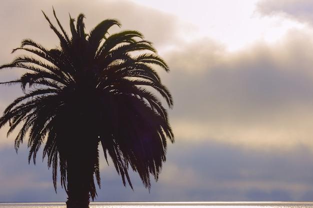 Palmeira e céu colorido com fundo dramático
