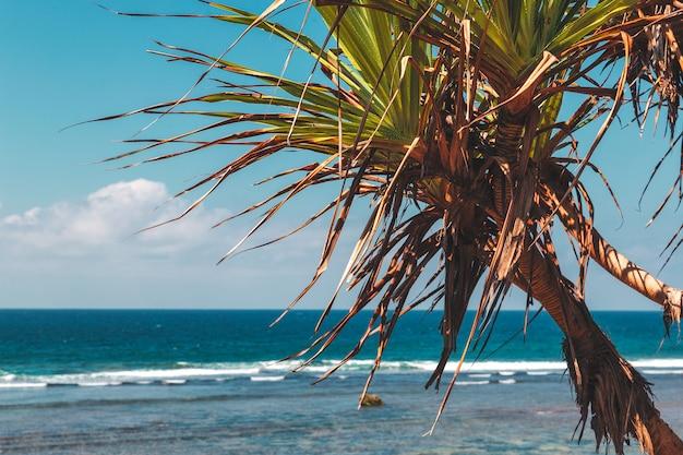 Palmeira e vista do mar tropical, nusa dua, ilha de bali
