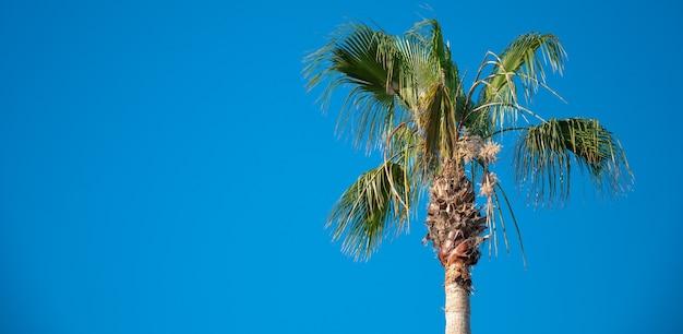 Palmeira em um fundo de céu azul com um lugar para uma inscrição.