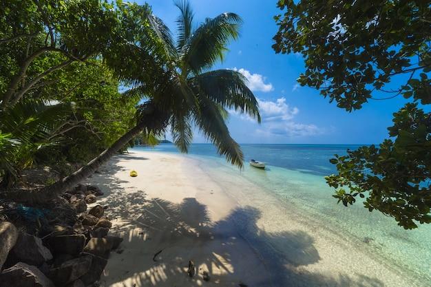 Palmeira em uma praia cercada por vegetação e o mar sob o sol em praslin, nas seychelles