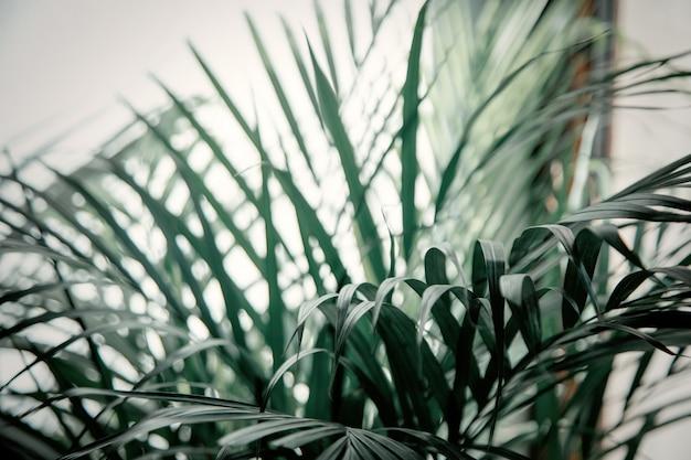 Palmeira interna e sombras na parede branca