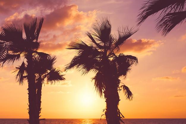 Palmeira na praia contra o céu colorido por do sol com nuvens. natureza bela . férias de verão