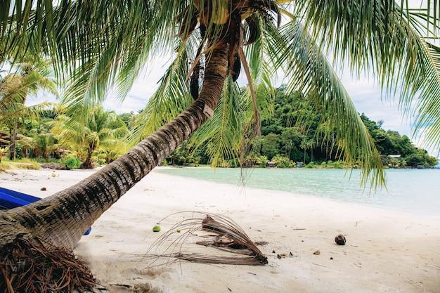 Palmeira na praia de areia no mar no verão.
