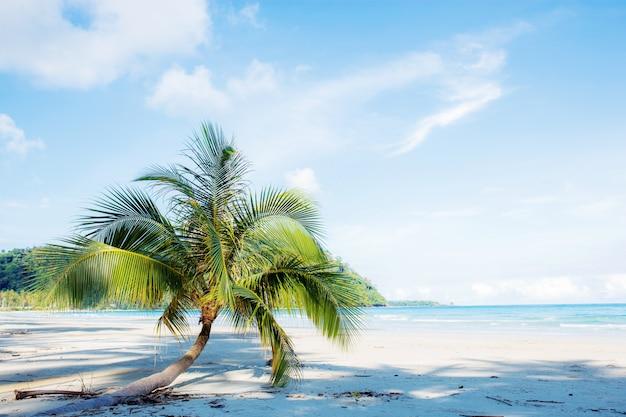 Palmeira na praia de areia.