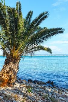 Palmeira na praia de verão lefkada, grécia