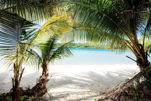 Palmeira na praia do mar com a luz solar.