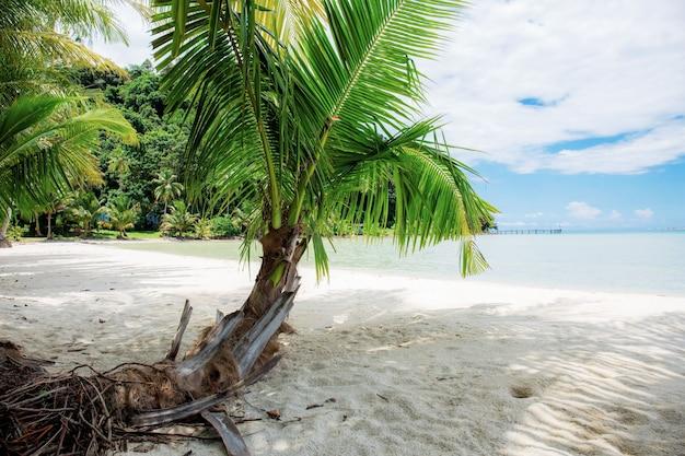 Palmeira na praia no céu.