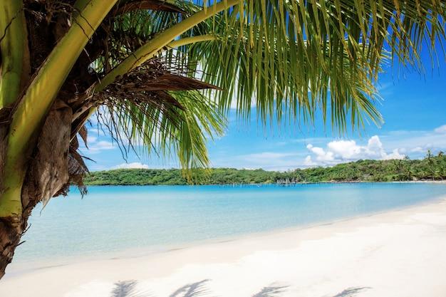 Palmeira na praia no verão.