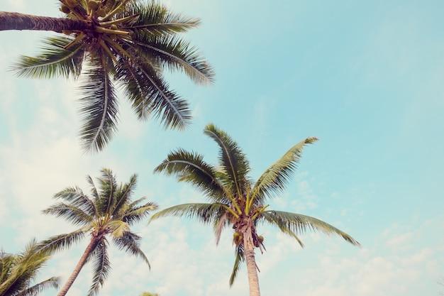 Palmeira na praia tropical com céu azul e luz do sol no verão