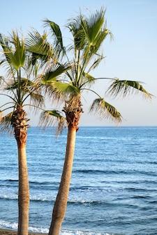 Palmeira na praia