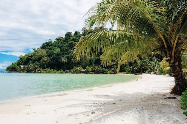 Palmeira na praia.