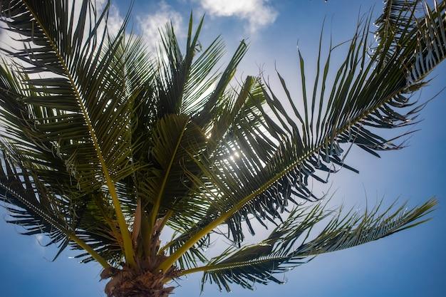 Palmeira no céu azul e no brilho do sol.