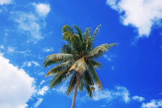 Palmeira no mar com o céu azul.