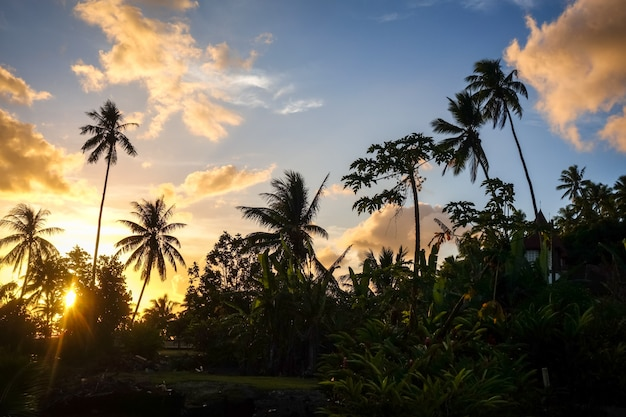 Palmeira no por do sol na ilha de moorea. polinésia francesa