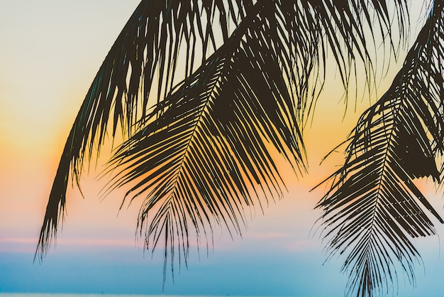 Palmeira silhueta
