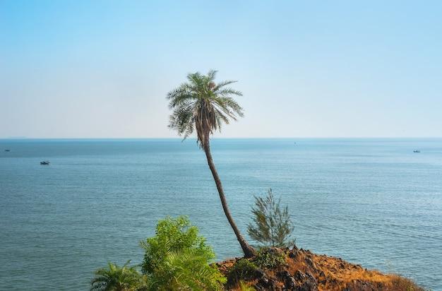 Palmeira solitária e verde alta na montanha contra o mar no exótico país asiático