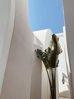 Palmeira tropical com folhas verdes exuberantes perto da casa bege, resort em frente ao céu azul