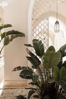 Palmeira tropical com folhas verdes exuberantes perto da casa branca, edifício do resort. Foto Premium