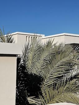 Palmeira tropical com folhas verdes exuberantes perto da casa branca, resort com céu azul