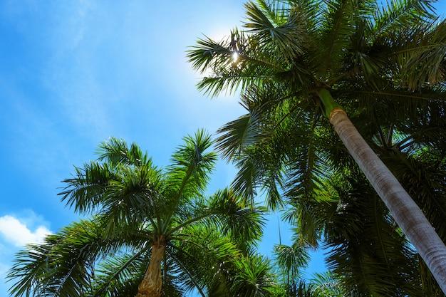 Palmeira tropical com luz do sol em um céu azul brilhante. férias de verão