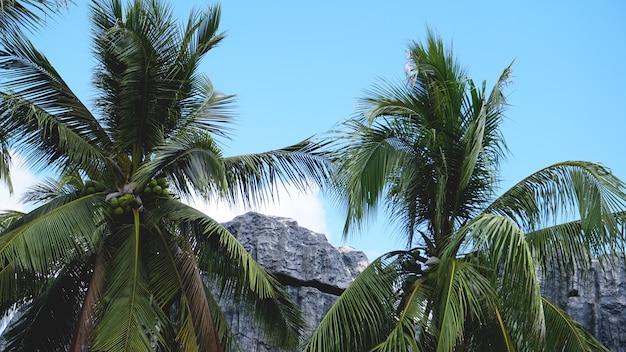 Palmeira tropical com luz do sol no céu azul e fundo abstrato da nuvem. férias de verão e a natureza viajam o conceito de aventura.