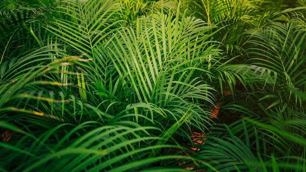 Palmeira tropical deixa sem costura de fundo