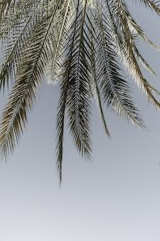 Palmeira tropical exótica de verão contra o céu azul