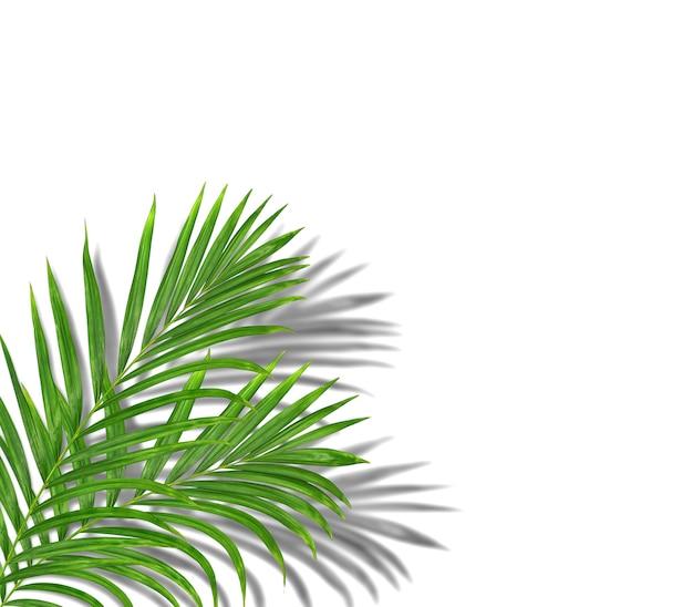 Palmeira tropical verde com sombra de fundo preta